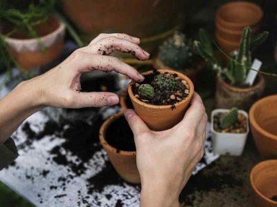 Landscaping Management